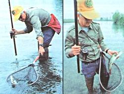 ловля сома на реке лаба